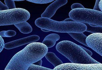 ارتباط باکتری های روده با سلامتی