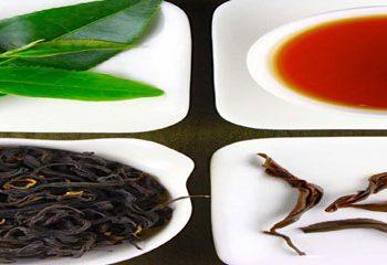 فواید مصرف چای برای سلامت مغز