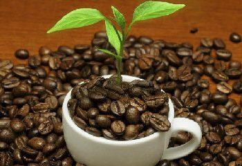 قهوه طول عمر را می افزاید.