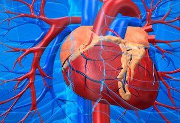 استراتژی های جدید جهت کاهش سالخوردگی سیستم قلبی – عروقی
