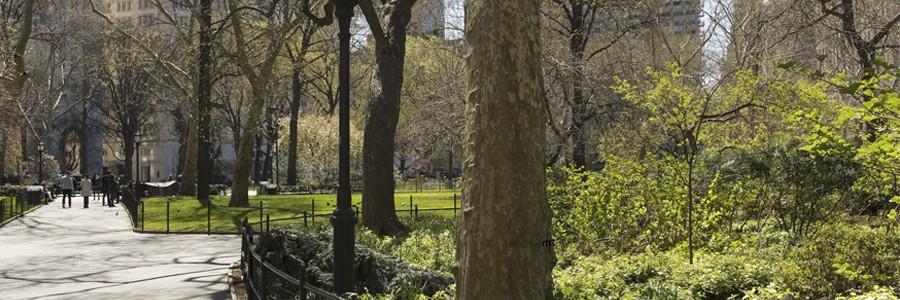 فضای سبز شهری به کاهش خطر سرطان سینه کمک میکند!